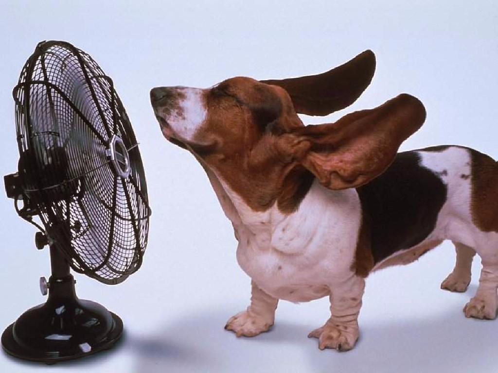 Nós-precisamos-reclamar-do-calor-novamente